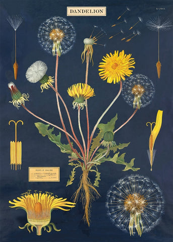 Cavallini - Dandelion Chart - Wrapping Paper / Poster