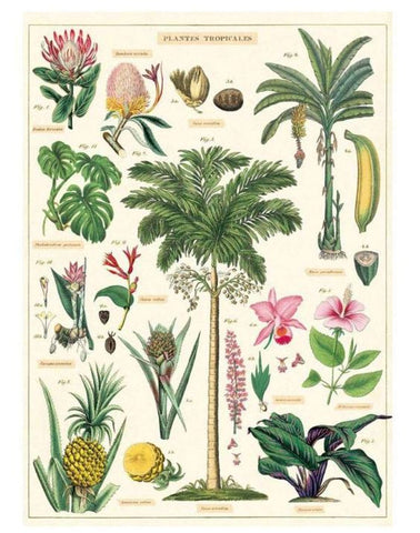 Cavallini - Tropical Plants - Wrapping Paper / Poster