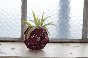 Air Plant Holder -  - Hand and Hide LLC