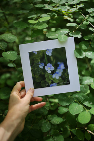 Speedwell wildflower card ~ Include a handwritten card with your order