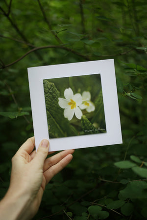 Primrose wildflower card ~ Include a handwritten card with your order
