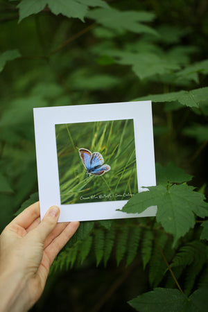 Common Blue Butterfly card ~ Include a handwritten card with your order