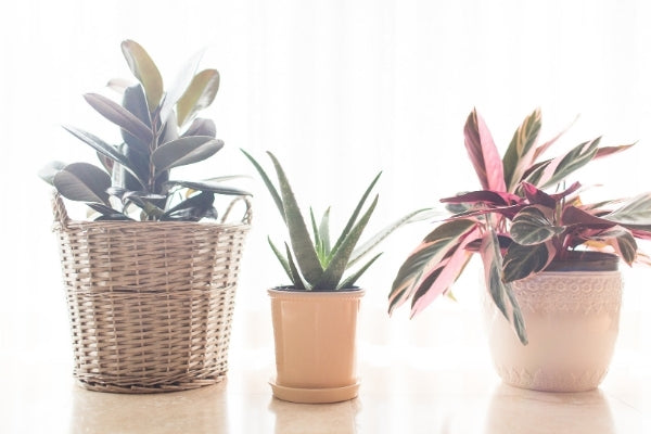 Baby wipes to clean plants