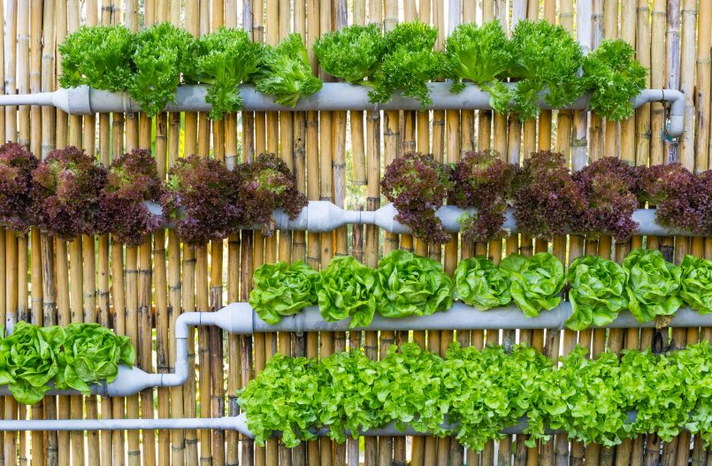 "VegBed Featured in DisruptorDaily's ""10 Companies Using Hydroponics Technology to Disrupt the Agriculture Industry"""