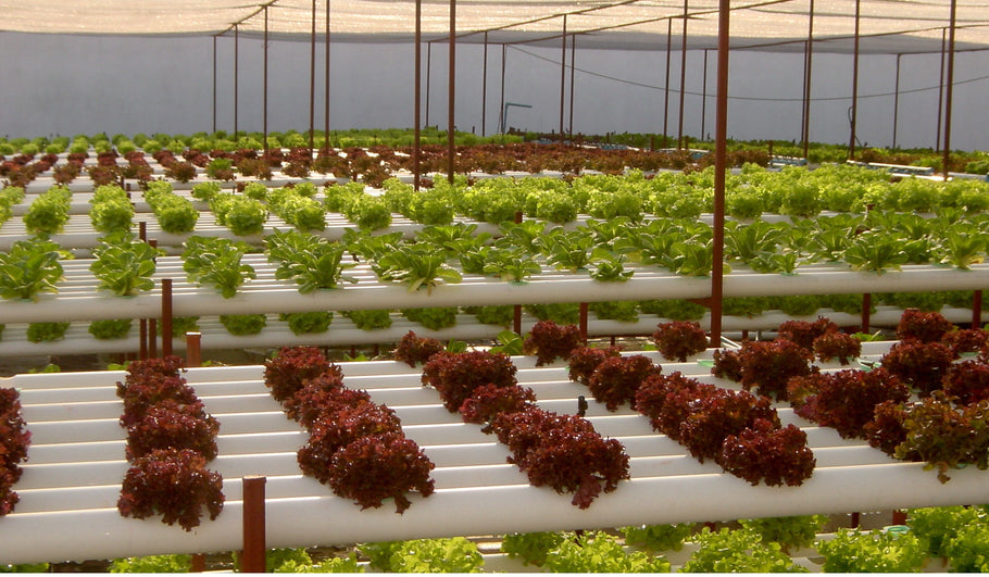 What Is Hydroponics And Why Should We Care? Part 1