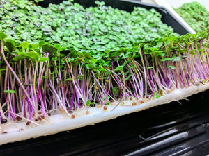 VegBed Microgreens Roll (10in x 120ft) - VegBed Hydroponic Grow Cubes