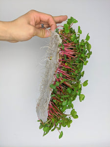 hand holding vegbed bamboo fiber mat with microgreens growing
