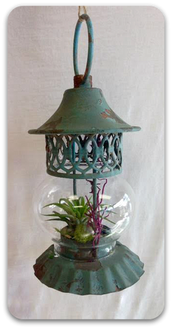 "Fancy Plants ""Garden Lantern"" Living Air Plant in Decorative Lantern w/Distressed Green Patina Finish"