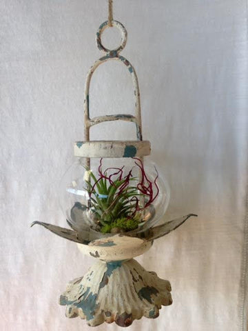 "Fancy Plants ""Garden Lantern"" Living Air Plant in Decorative Lantern w/Distressed White Patina Finish"