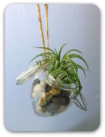 "Fancy Plants ""Mini Hanging Jar"" Living Air Plant in Decorative Mini Glass Jar"