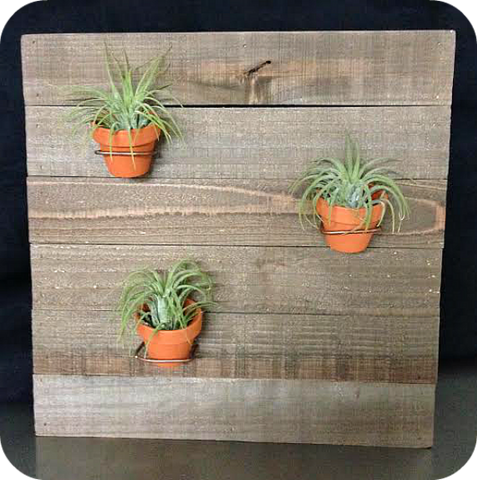 "Fancy Plants ""Rustic Board w/Flower Pots"" Living Air Plant Wall Decoration"