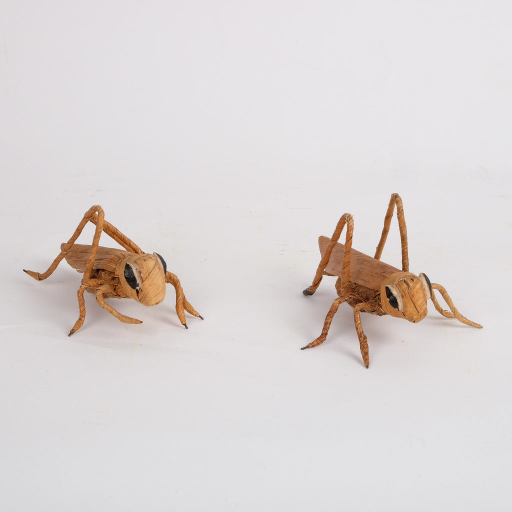 Straw Grass Hoppers