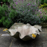 Stunning Willy Guhl Concrete Planter