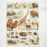 Vintage French Animal Illustrations