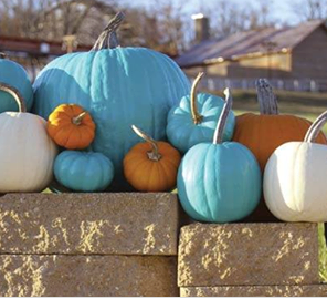 The Teal Pumpkin Project!!