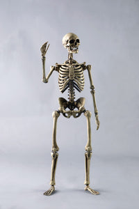 [BS011] The Human Skeleton (Diecast Alloy)