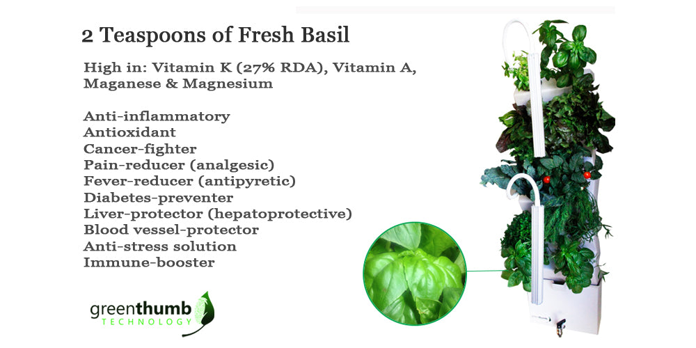 Grow basil in the VeggieWall, indoor garden. Hydroponic indoor garden. Urban gardening.
