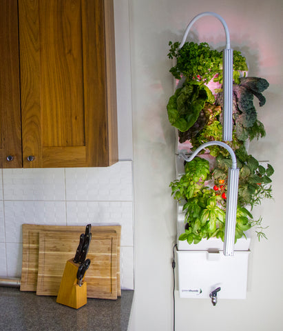 Indoor vertical garden in apartment