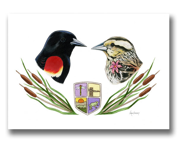 Red-Winged Blackbird Bird Couple