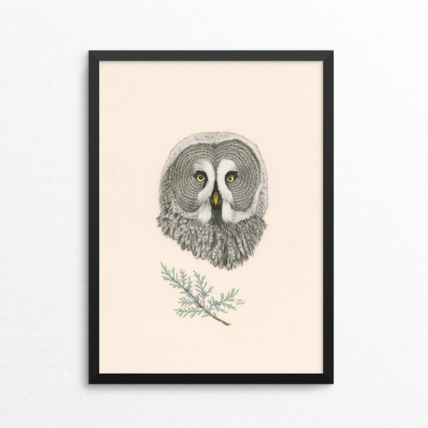 Great Grey Owl / Grey Owl Juniper - Naked Animals Print