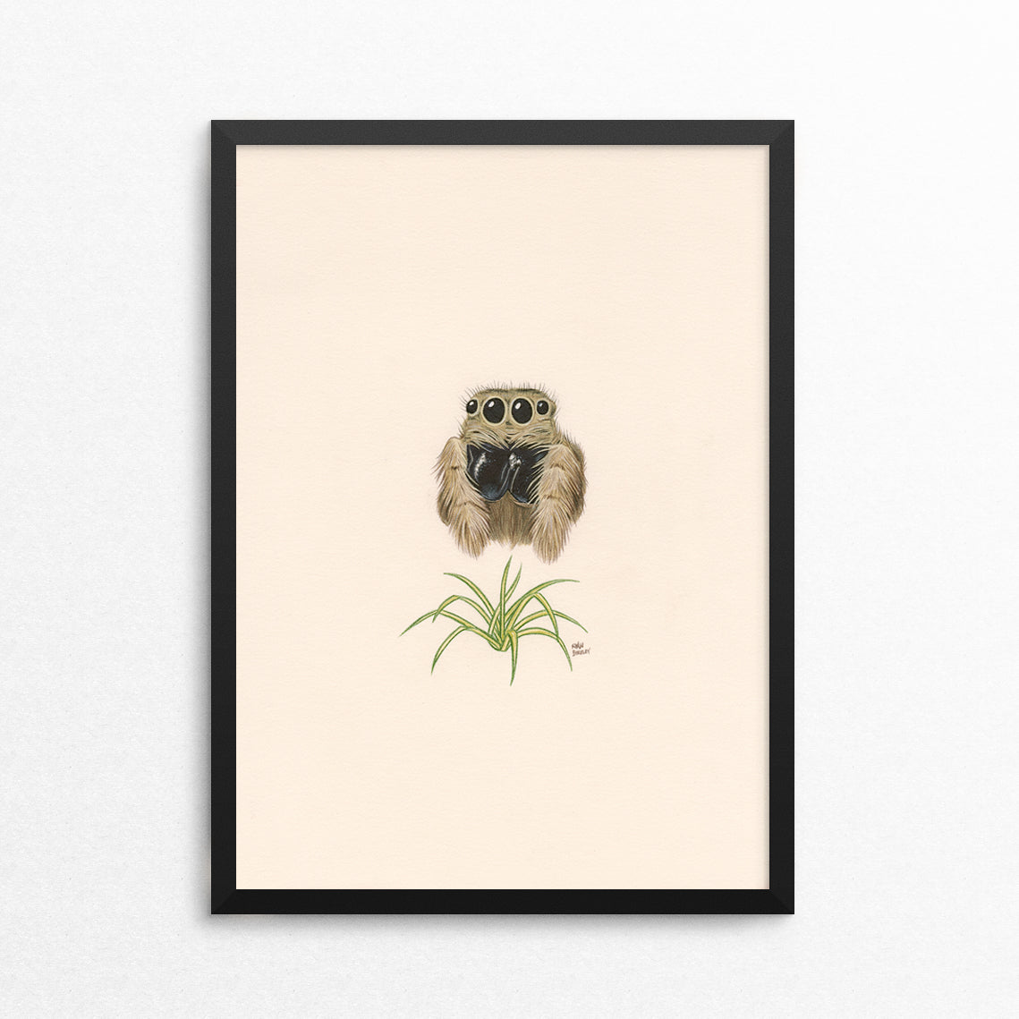 Jumping Spider / Spider Plant - Naked Animals Print
