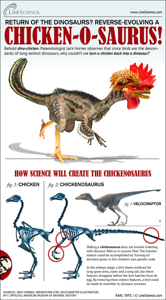 Since birds are the only surviving members of the family tree of the dinosaurs, why can't we flip some switches in the genetic code and return a chicken back to its former glory as a dinosaur?