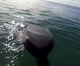 ppp handboards gives you absolute control over your bodysurfing handboard