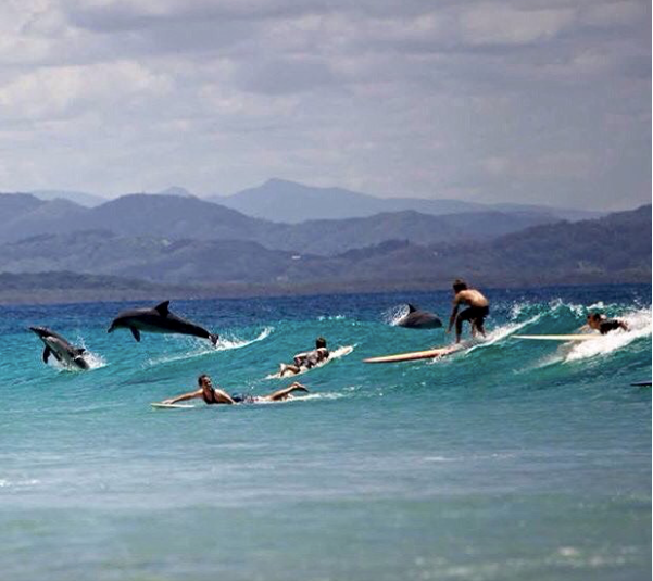 Dolphins at Byron Bay. PPP bodysurfing hand boards are made fun and zippy paulownia wood  body surfing handboards. PPP carbon bodysurfing hand planes are hand made carbon fibre bodysurfing handplanes