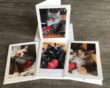 "NEW! The ""Cats with Heart 2"" Photo Card Collection"