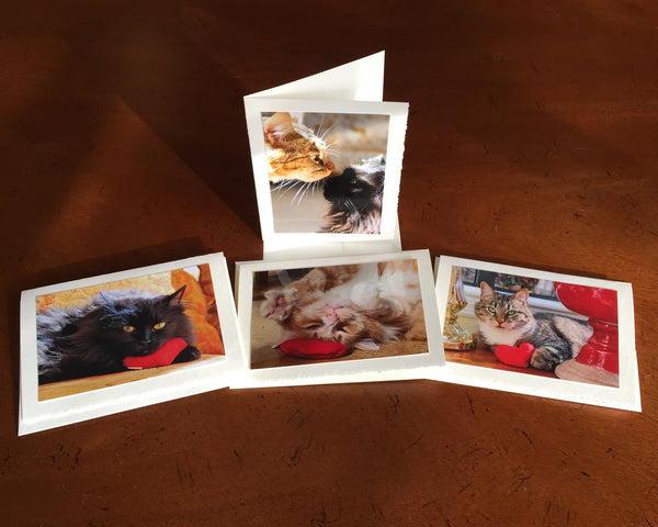 "The ""Cats with Heart"" Photo Card Collection"