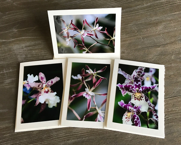 "The ""Dancing Lady Orchids"" Photo Card Collection"