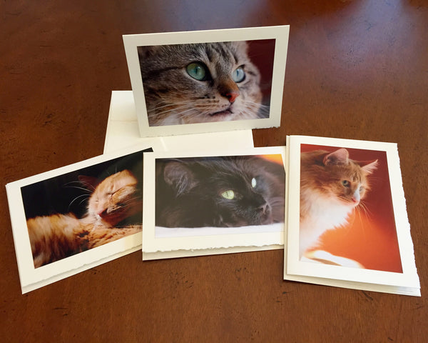 "The ""Cat"" Photo Card Collection"