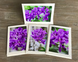 "The ""Purple Orchids"" Photo Card Collection"