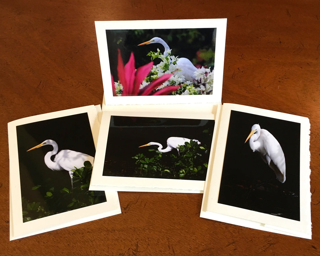 "The ""Great Egret"" Photo Card Collection"