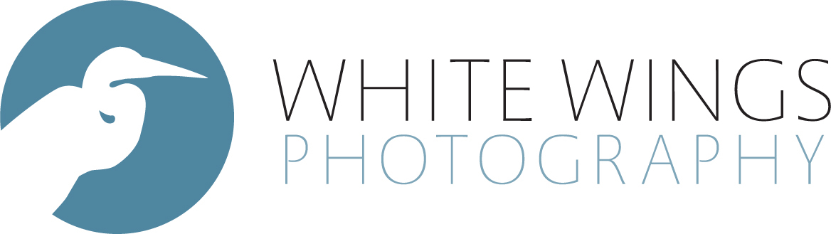 White Wings Photography