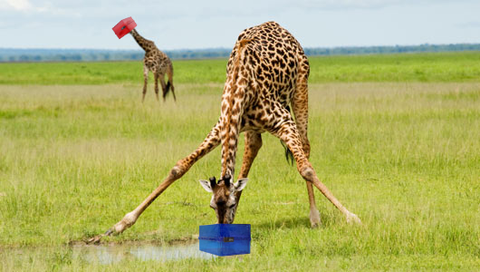 Lockabox is perfect for most things, except maybe giraffes #nogiraffes