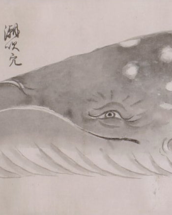 Japanese Whale Watercolors