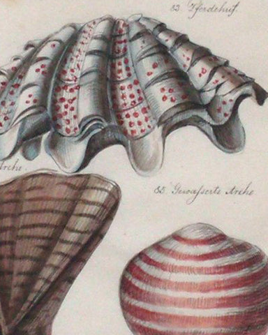 Shell Watercolors