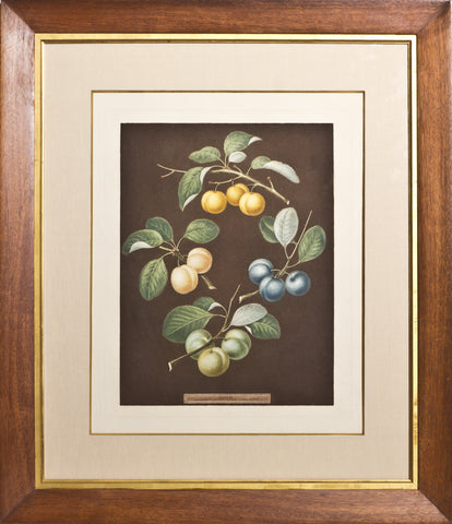 Framed-Drap d'Or, White Gage Plum, Blue Gage Plum, Green Gage