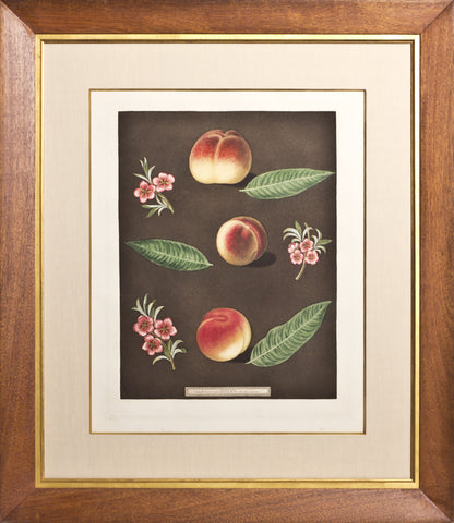 Framed-Early Newington Peach, Buckinghamshire Migonne, Migonne Barrigton Peach
