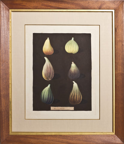 Framed-Green Ischia, Red Turkey Fig, Earl of Besborary, Brown Malta, Black Ischia
