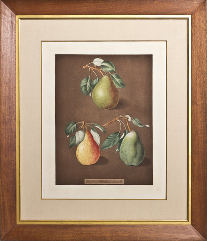 Framed-Brown Beurre, Golden Beurre, Colmar Pear