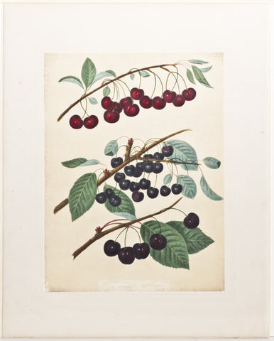 Matted-Cherries