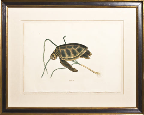 Framed-The Green Turtle
