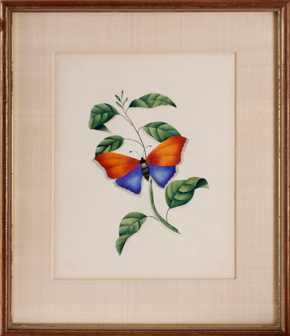 Butterly Watercolor
