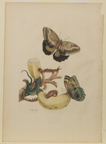 Plate 23