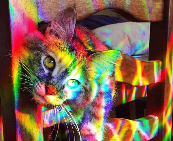 Rainbow light cat