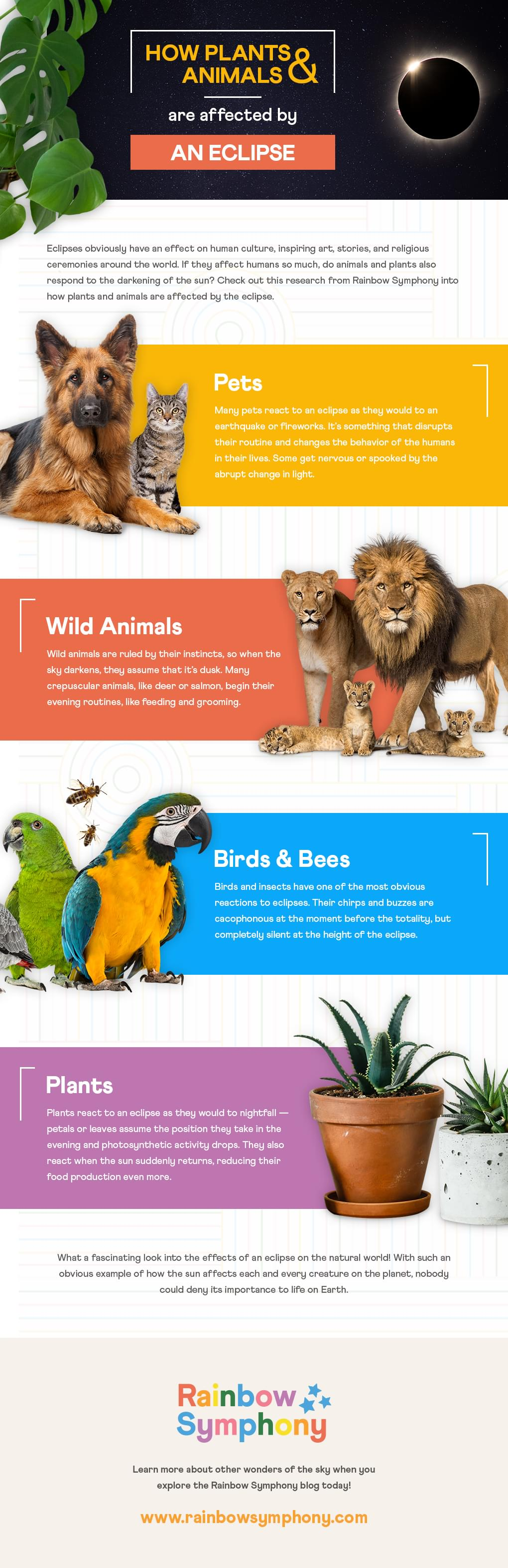 A Rainbow Symphony Infographic About How Plants And Animals Are Affected By An Eclipse