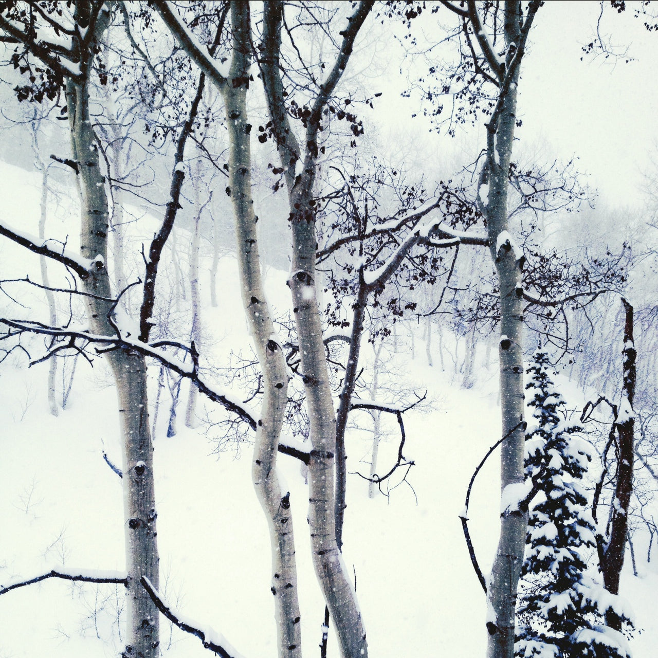 Freekskier powder trees artsy