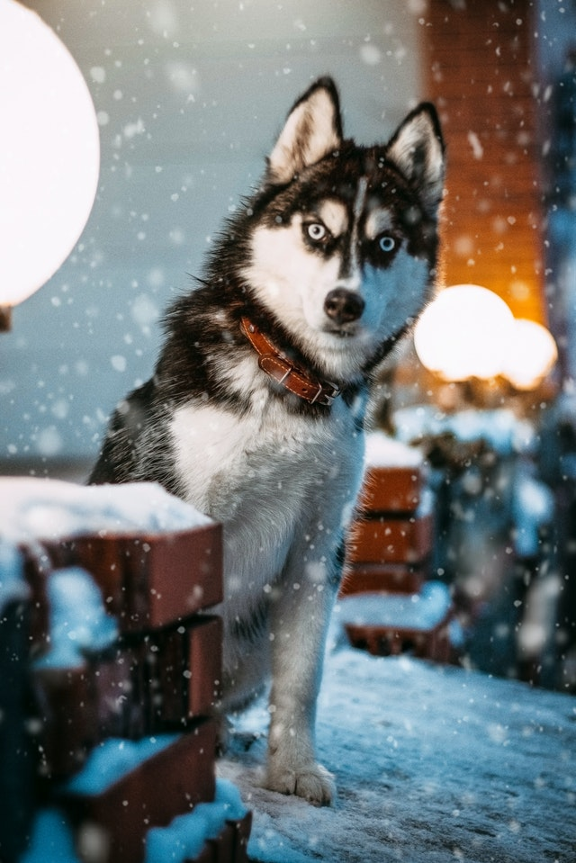 Cold Weather Activities for Dogs